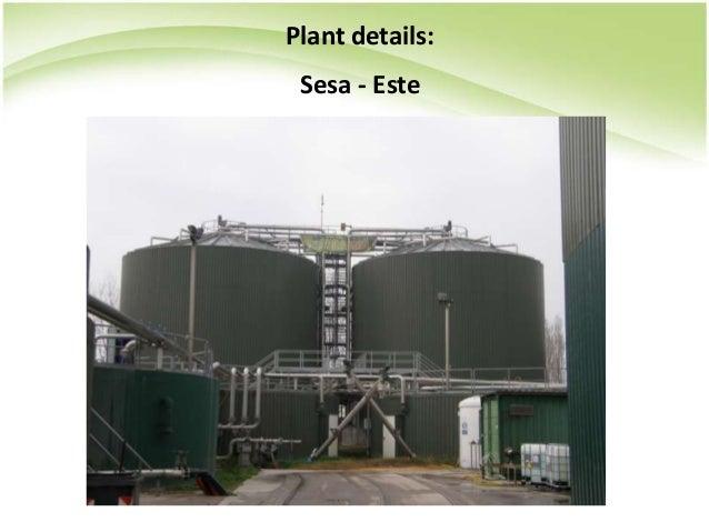 Plant details: Sesa - Este