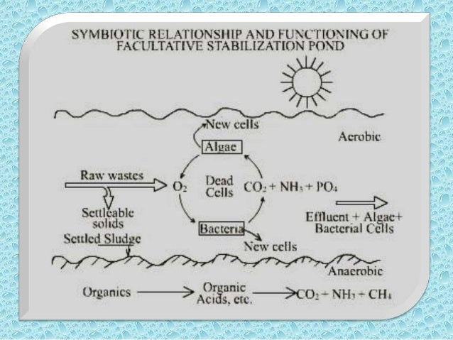 Removal Efficiency of    Trickling FilterThe Removal efficiency of TotalOrganic Carbon (T. O. C.) from Trickling Filter is...