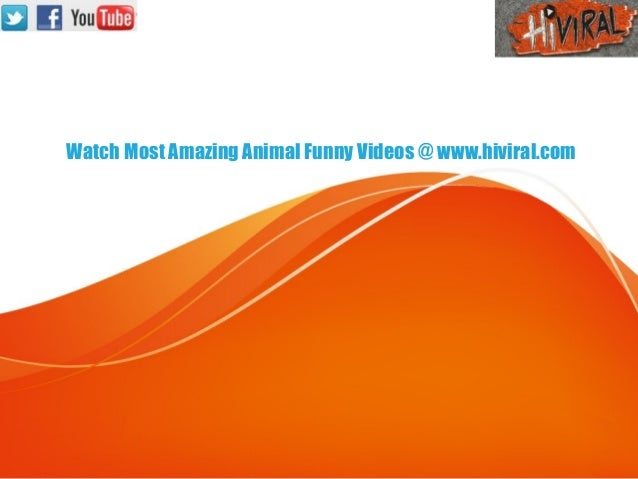 Watch Most Amazing Animal Funny Videos @ www.hiviral.com