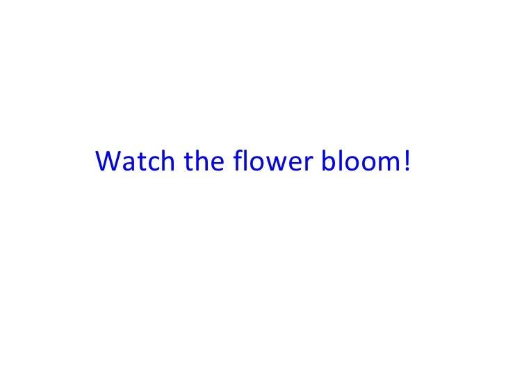 Watch the flower bloom!