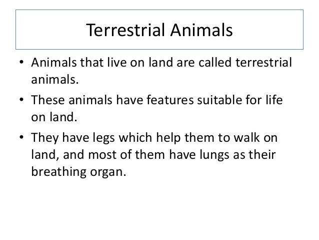 terrestrial habitat on all animals Aquatic vs terrestrial animals the fundamental difference between aquatic and terrestrial animals is their habitat and their adaptation to that habitat.