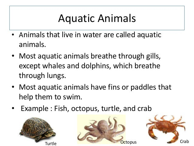 Pictures and names of animals that lives in water