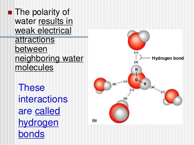 ap biology water properties essay Water has many unique properties that make life possible on earth one property is cohesion the cohesion property is properly defined as the binding of water molecules by hydrogen bonds water has this property as a result of the chemical bonding between water cohesion of the strong hydrogen bonds allows the water molecules to stick [.