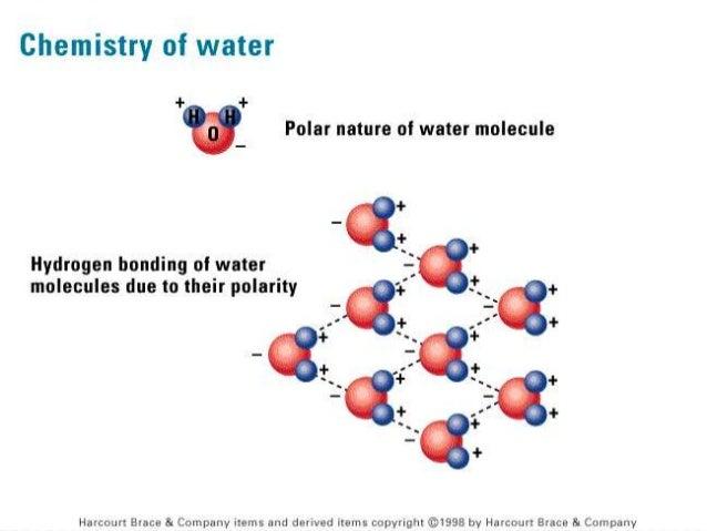 properties of water presentation biology sliderbase playitaway me