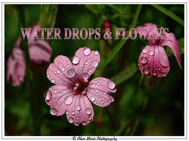MUSIC Nana Mouskouri - Que Je Sois Un Ange PPS BY RAISSA WATER DROPS & FLOWERS