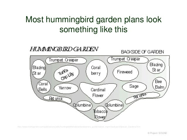 Attractive Project SOUND; 7. Most Hummingbird Garden ...