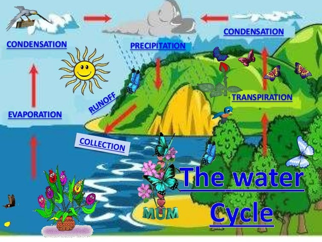 The Water Cycle By TAPLOR PRECIPITATION EVAPORATION CONDENSATION TRANSPIRATION