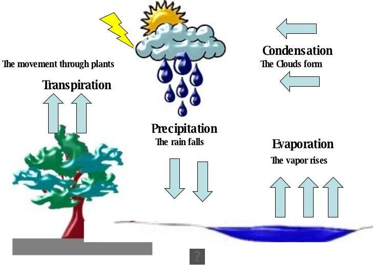 3 Evaporation The Vapor Rises Condensation Clouds Form Precipitation