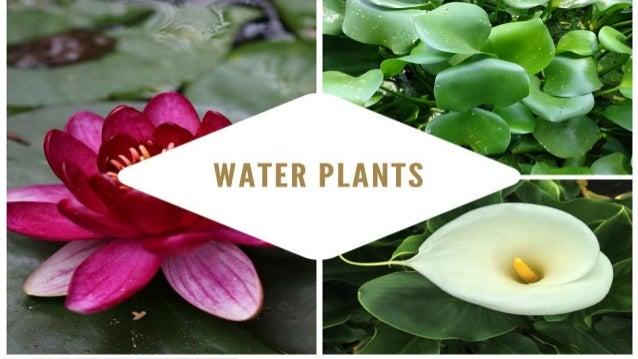 Water Garden Maintenance Picture With Water Garden Maintenance
