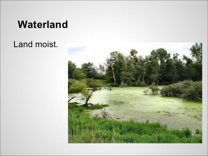 WaterlandLand moist.