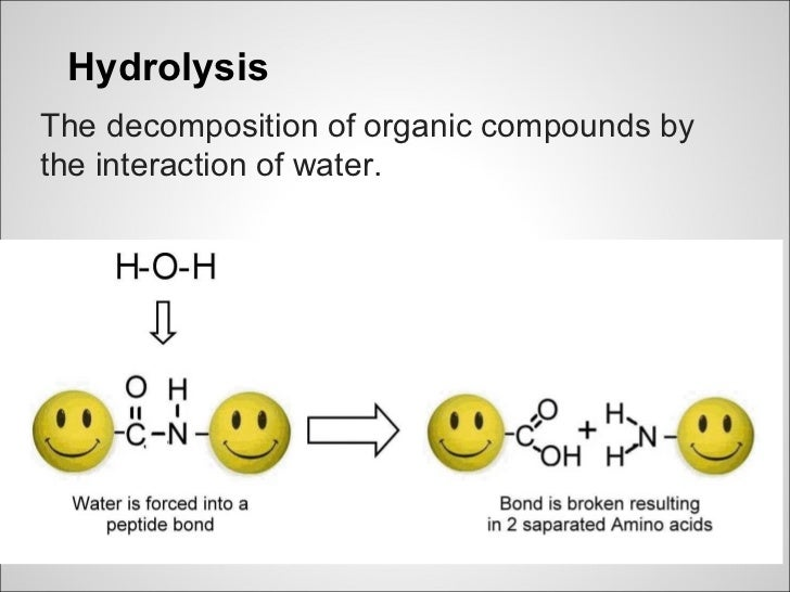 HydrolysisThe decomposition of organic compounds bythe interaction of water.