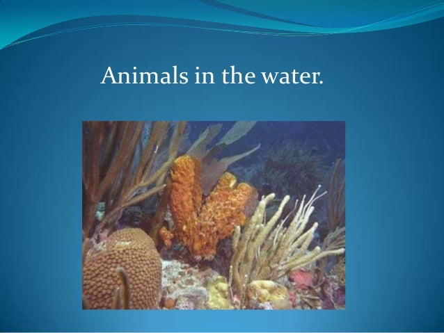 Animals in the water.