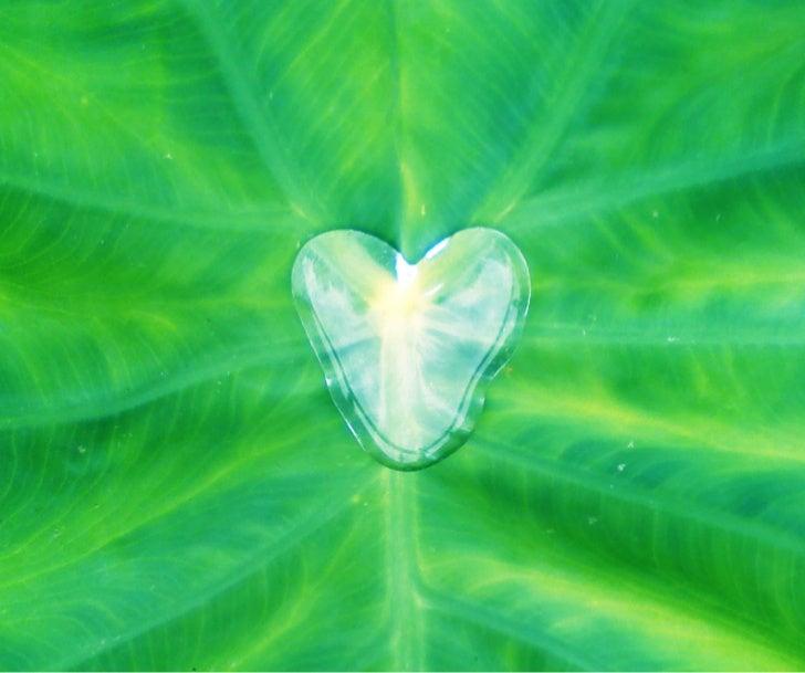Water Heart on Leaf