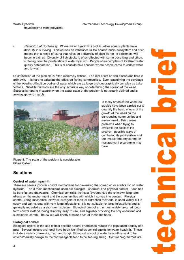 The effect of water hyacinth proliferation