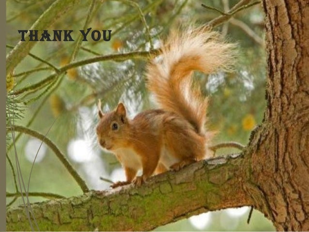Image result for thank you red squirrel images