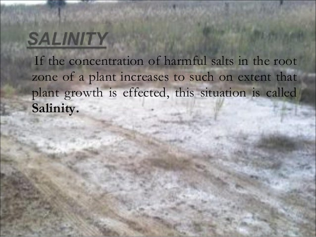 water logging and salinity Hyderabad, march 5: agri-cultural scientists have expressed concern over shortage of water and the threat posed by the increasing water-logging and salinity in sindh.