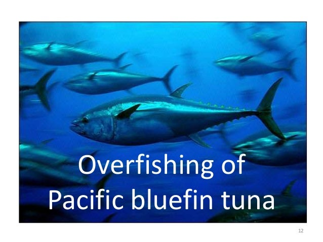 Overfishing of the Atlantic Bluefin Tuna