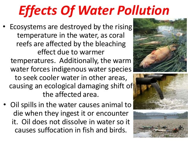 essay about water pollution cause and effect Here is a cause and effect essay example on pollution you may use it as a sample essay to think over your own ideas in writing an essay about pollution or any other cause and effect essay.