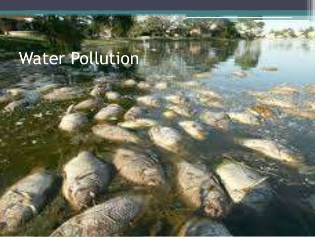 the negative effects of water pollution on fish numbers in america South the negative effects of water pollution on fish numbers in america sentinel island killing fish because ruby as the worlds most valued gemstone for.