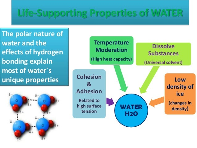 Water's life supporting properties