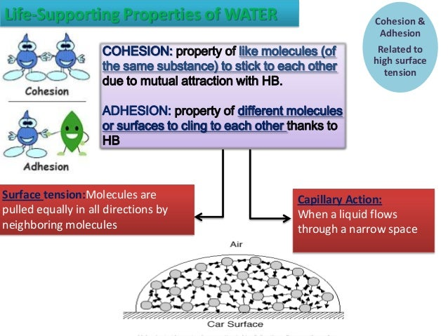 Water Adhesion