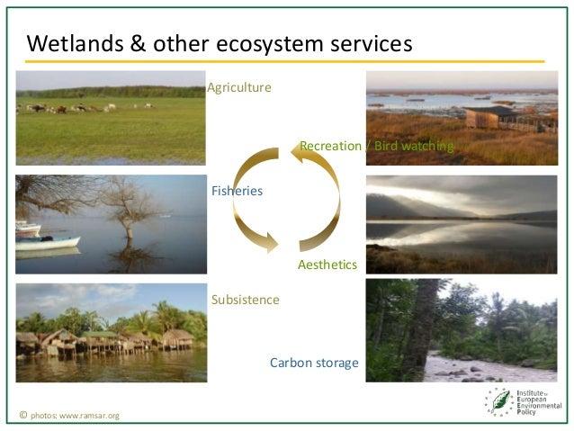 Natural Vs Man Made Wetlands