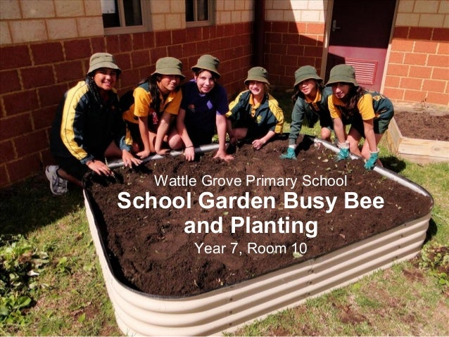 Wattle Grove Primary School School Garden Busy Bee and Planting Year 7, Room 10