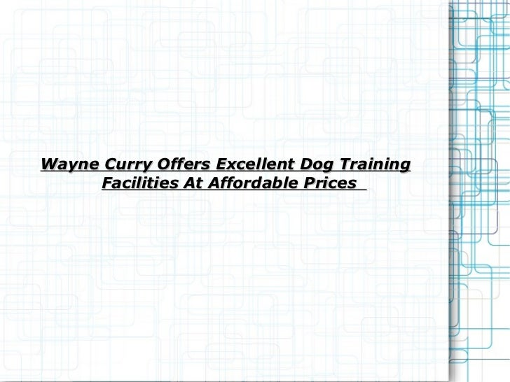 Wayne Curry Offers Excellent Dog Training Facilities At Affordable Prices