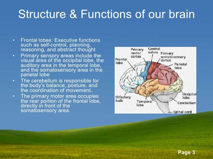 Structure & Functions of our brain <ul><li>Frontal lobes: Executive functions such as self-control, planning, reasoning, a...