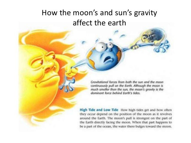 Sun vs. moon - affects on tides.?