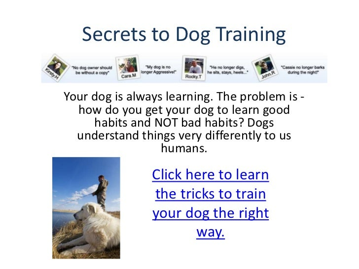 Secrets to Dog TrainingYour dog is always learning. The problem is -  how do you get your dog to learn good     habits and...