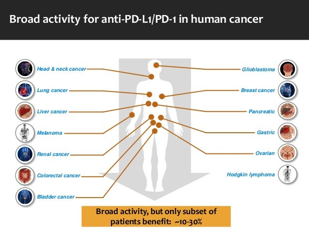 The immunotherapy of cancer: past, present & the next frontier