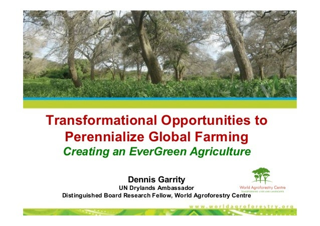 Transformational Opportunities to Perennialize Global Farming Creating an EverGreen Agriculture Dennis Garrity UN Drylands...