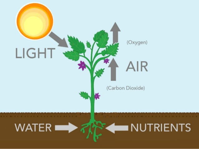 What do plants need to live for What does soil come from