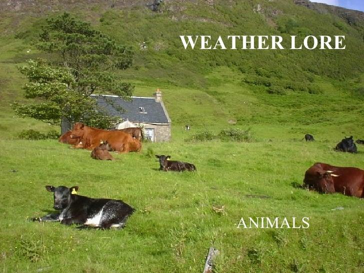 WEATHER LORE ANIMALS