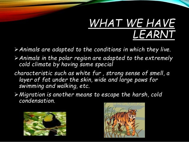 Weather Climate and Adaptations of Animals to Climate