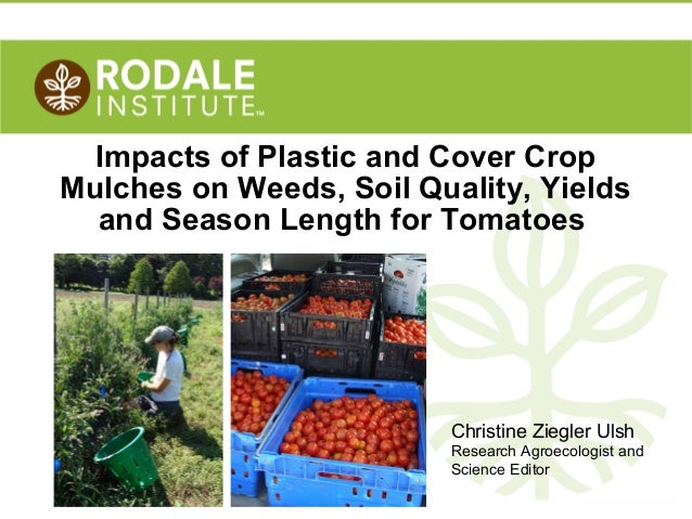 Impacts of Plastic and Cover Crop Mulches on Weeds, Soil Quality, Yields and Season Length for Tomatoes  Christine Ziegler...