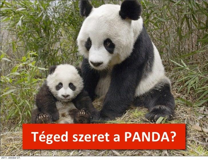 Téged szeret a PANDA?2011. október 27.