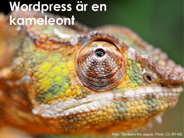 Wordpress är en kameleont Foto: Tambako the Jaguar, Flickr. CC BY-ND