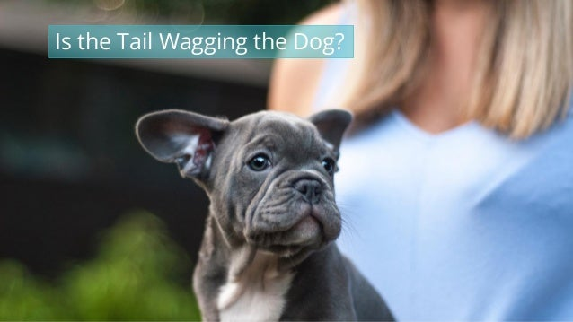 #wpewebinar Is the Tail Wagging the Dog?