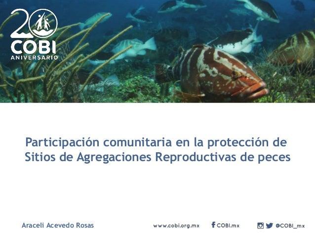 Participación comunitaria en la protección de Sitios de Agregaciones Reproductivas de peces Araceli Acevedo Rosas