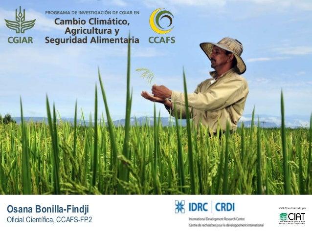 Osana Bonilla-Findji Oficial Científica, CCAFS-FP2 CCAFSes liderado por