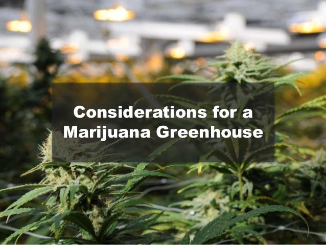 how to build the best greenhouse for cannabis