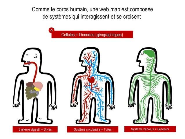 Comme le corps humain, une web map est composée de systèmes qui interagissent et se croisent Cellules = Données (géographi...