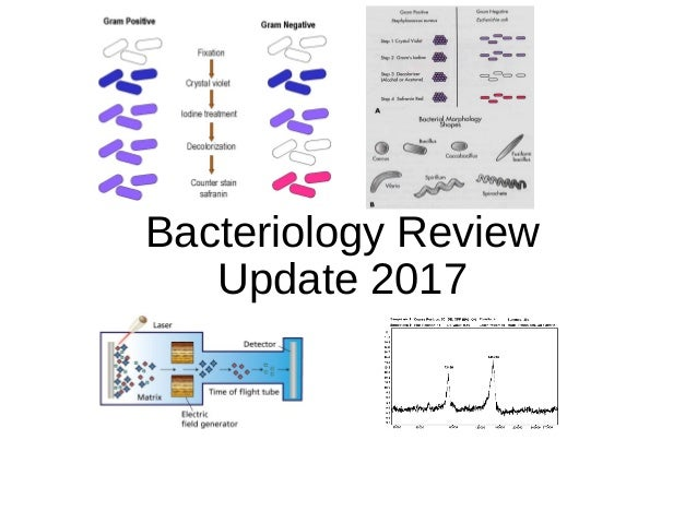 Bacteriology Review Update 2017