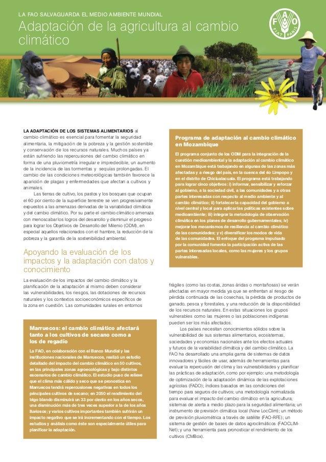 La adaptación de los sistemas alimentarios al cambio climático es esencial para fomentar la seguridad alimentaria, la miti...