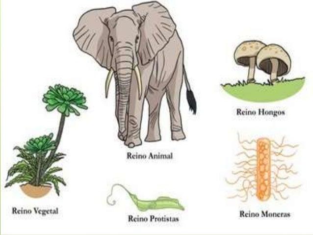 Webquest: Diversidad de los seres vivos  Slide 2