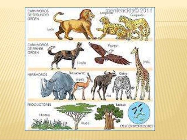 ¿Que es la taxonomía? La taxonomía (del griego ταξις, taxis, 'ordenamiento', y νομος, nomos, 'norma' o 'regla') es, en su ...