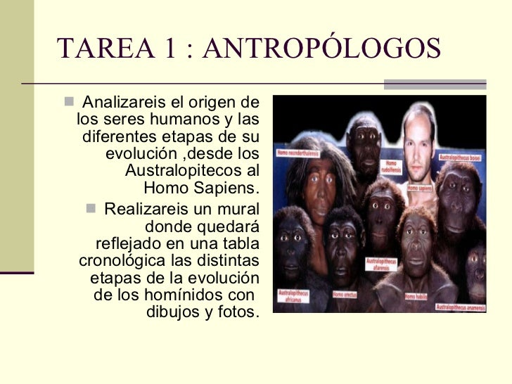 TAREA 1 : ANTROPÓLOGOS <ul><li>Analizareis el origen de los seres humanos y las diferentes etapas de su evolución ,desde l...