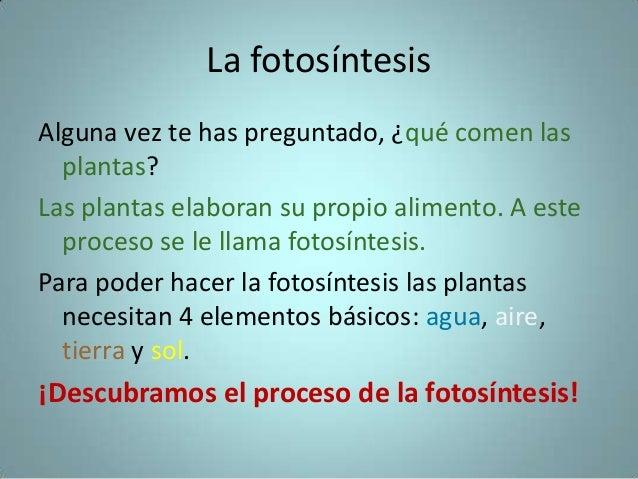 Las plantas en el proceso de la fotosintesis